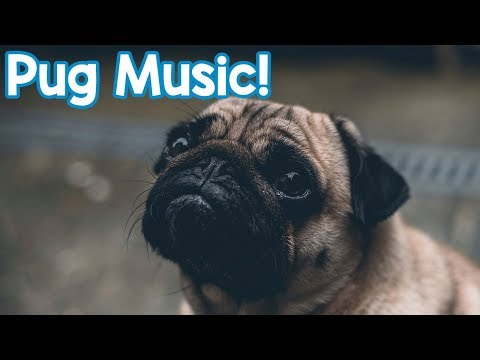 Music for Pugs! Help to Relax Your Stressed, Anxious or Lonely Pug with this Soothing Music!