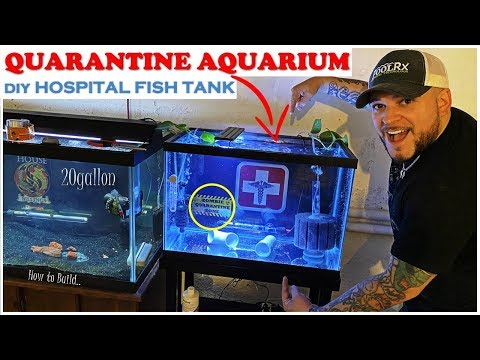 QUARANTINE AQUARIUM FOR SICK FISH (DIY FISH HOSPITAL)