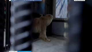 В Красноярск с севера региона на самолете доставили белого медвежонка