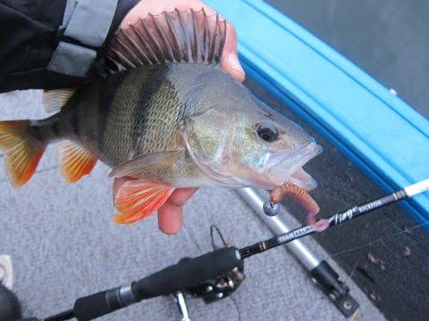 видео о рыбалке всерьез рыбалка с лодки на окуня
