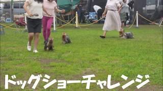 2018年7月16日熱海愛犬ドッグクラブ展 トレーニング期間がほとん...