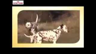 Royal Canin Razas: pienso para perros Dálmata