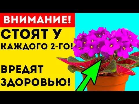 СРОЧНО УБЕРИ эти 7 ЯДОВИТЫХ комнатных растений, которые вредят здоровью!
