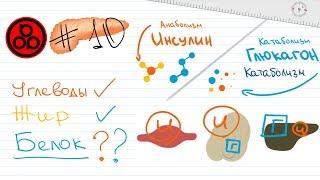 #10 Інсулін і глюкагон: дослідження про вплив білка