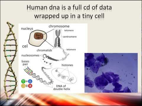 Comparing Human and Chimpanzee DNA