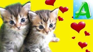 Arina and kittie very kindly video