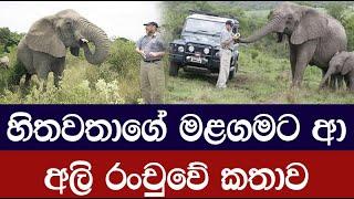 කෑම දුන් මිනිසාගේ මළගමට ආ අලි රංචුවේ කතාව - Elephants Paid Their Respects