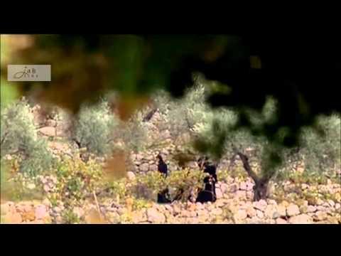 Vie de Saint Charbel  حياة مار شربل - الفيلم الكامل Full movie HD thumbnail