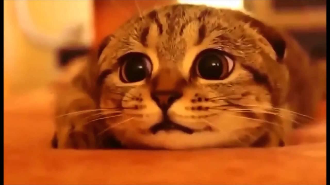 Няшные котики - YouTube