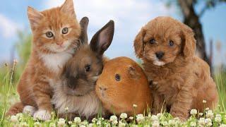 тест: кто ты из домашних животных