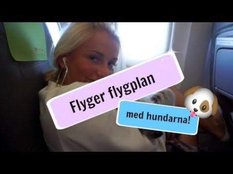 Mikaela Yngwe