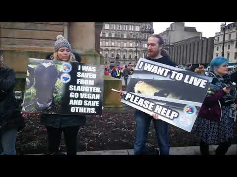 Slaughter in the city Glasgow, Save movement. by Vegan pangea her channel linked in the description