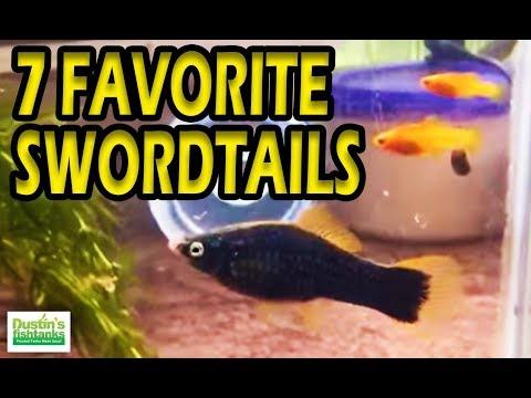 My FAVORITE AQUARIUM FISH: 7 TYPES Of Platies Swordtail Fish