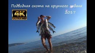 Реальная подводная охота на крупного лобана.Черное море июнь 2017. 4k видео