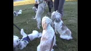 Small Dogs Meetup Group Outing At Sawmill Creek Mississauga Toronto