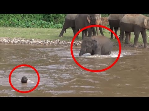 7 Times ANIMALS SAVING HUMANS Caught On Camera | FUN2KNOW!