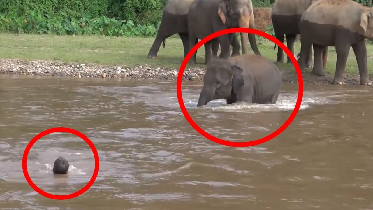 7 Times ANIMALS SAVING HUMANS Caught On Camera   FUN2KNOW!