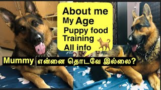 Ennai patri all information neengal ketavai ? | German shepherd puppy food , training ,pet care tips