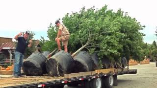 Fossil Creek Tree Farm: Man, Those are some Beautiful Trees!!