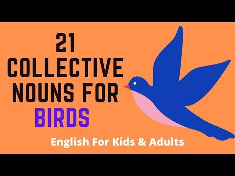 21 Collective Nouns For Birds