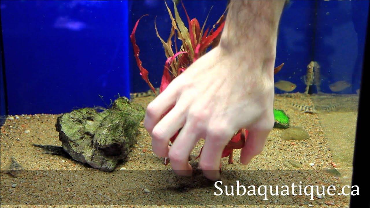 comment planter en aquarium