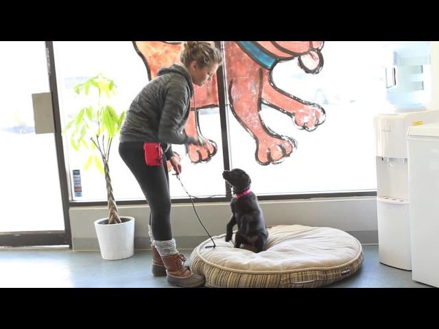 TYD60 Moment- Puppy Training Vocabulary