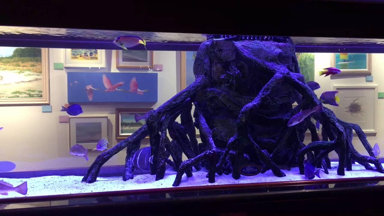 Freshwater juvenile fish - 700 Gallon Saltwater Juvenile Fish Nursery Tank Rumfish Grill