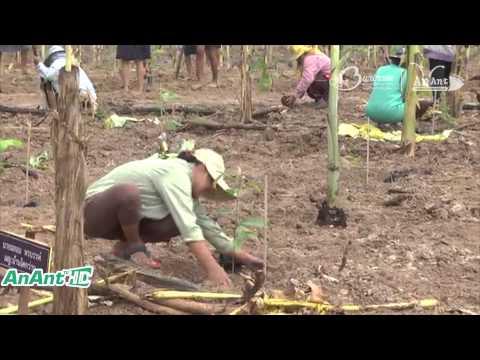จังหวัดบุรีรัมย์ จัดโครงการปลูกป่าไม้ยางนา เฉลิมพระเกียรติสมเด็จพระเทพรัตนราชสุดาฯ
