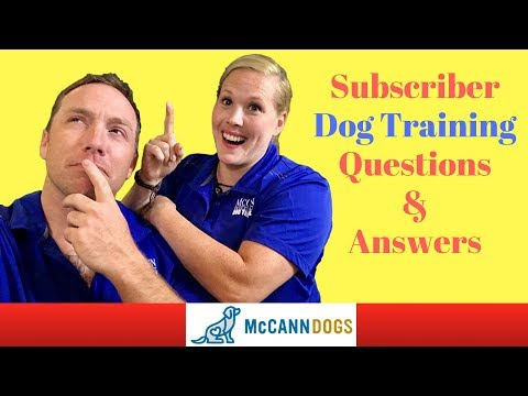 Dog Training Questions, Comments & Answers For Subscribers