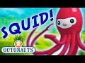 Octonauts - Learn about Squid & Octopuses | Cartoons for Kids | Underwater Sea Education