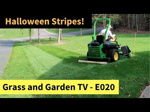 Fall Lawn Tips - Striping the New Grass at 29 Days