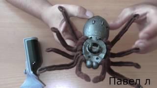 паук обзор