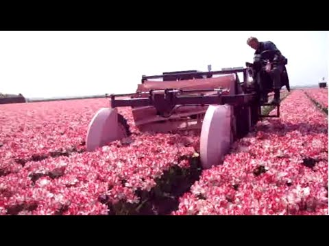 Amazing Modern Agriculture Machines You Have Never Seen Before