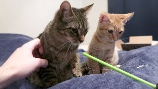 DUDE THE CAT & DUDETTE THE KITTEN PLAY TOGETHER!!