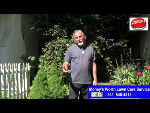 REASONABLE RATES MONEY'S WORTH LAWN CARE SERVICE MEDFORD JACKSONVILLE