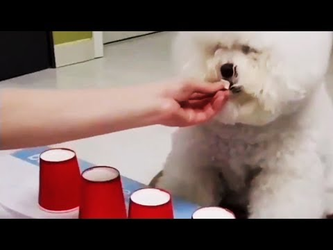 Showing Dogs Magic | Funny Compilation