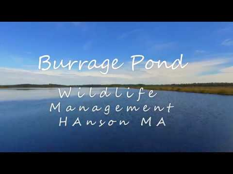 Burrage Pond Wildlife Management Area Hanson MA