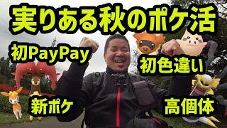 【ポケモンGO】実りある秋のポケ活、初PayPay、高個体、初色違い、新ポケ