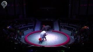 """Впервые в Новосибирске новогодняя программа """"Слоны и Тигры"""" всемирно известного Итальянского Цирка"""