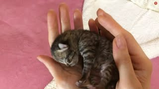 Mama cat takes care of her cute little kittens