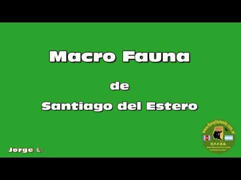 Macro Fauna de Santiago del Estero