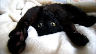 Смешное видео про котов и кошек. Funny cats video. Смешные кошки и коты и котята.