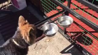 Вальер для собаки своими руками.