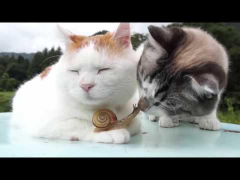 Zen Cat Is Super Chill