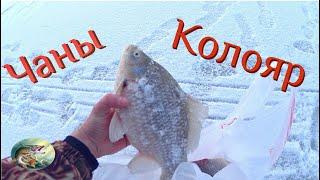 Рыбалка на оз.Чаны/КОЛОЯР/28.11.20