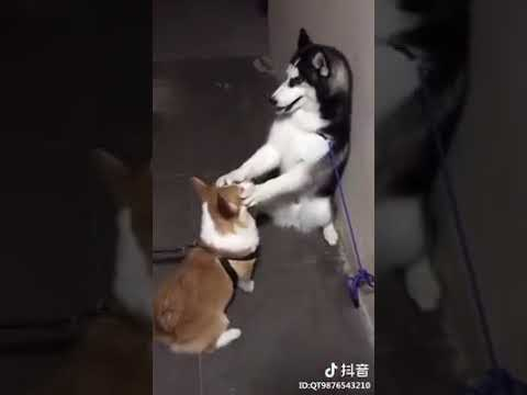 Dog Series: When you try to calm down your boy