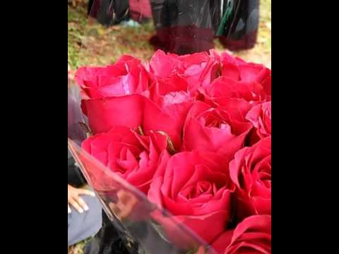 Bunga Mawar Merah Satu Tanda Cinta
