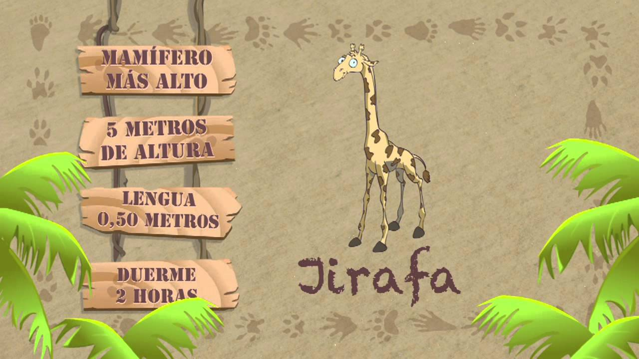 Las caracter sticas de la jirafa youtube for Taxonomia de la jirafa