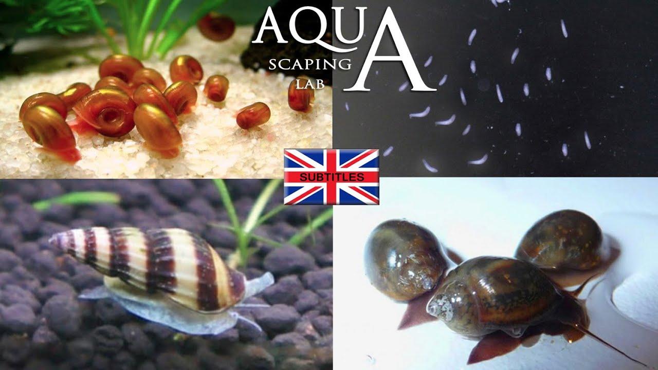 Aquascaping Lab  Aquarium Parasites elimination of