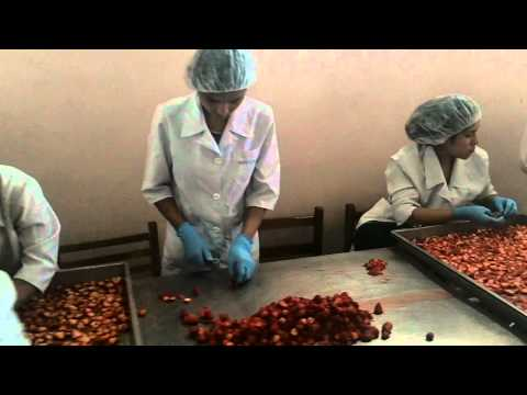 Organic Strawberries Silk Road Organic Foods Uzbekistan Part 1